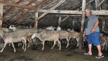 Разяснителна кампания за борбата с чумата по животните по границата