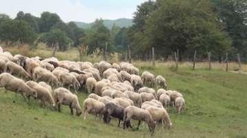 Порожанов: Отказът на фермерите да допуснат лекарите е нарушение