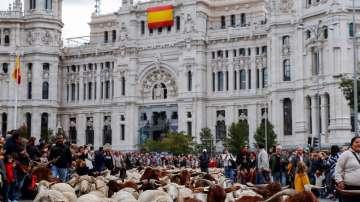 Овце превзеха центъра на Мадрид