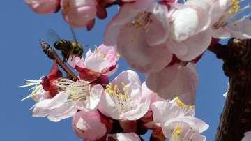 Пчелари от Плевенско се оплакват от масово измиране на пчелите