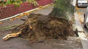 50 сигнала за паднали дървета у нас