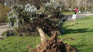 Силният вятър в София повали дървета и отнесе предмети