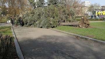 Паднали дървета и счупени клони след бурния вятър (СНИМКИ)