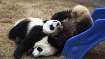 Китай подари две панди на Финландия