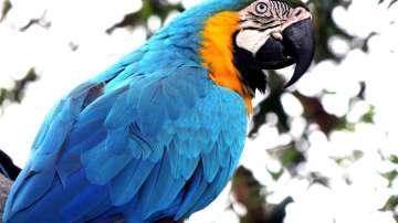 Папагал попадна в уралски затвор