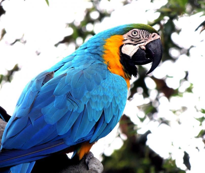 Вълнист папагал долетял до територията на Невянската затворническата колония в