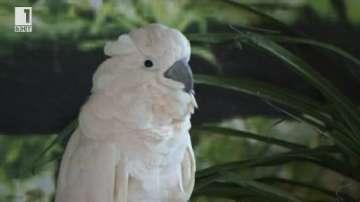 Най-голямата изложба за екзотични птици в Източна Европа
