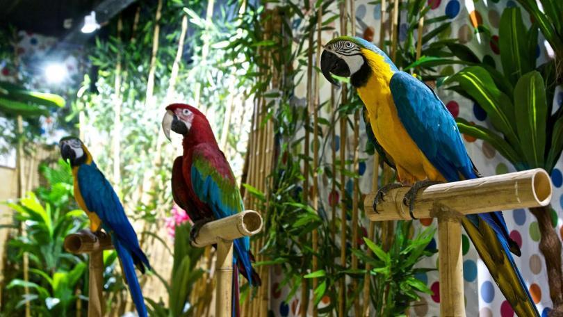 папагали три континета изложба стара загора галерия