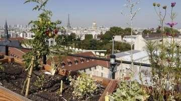 Зелена светлина: Зеленчукови градини по покривите на Париж