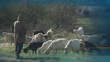 Пастирите на паша вече ще трябва да водят дневник при извеждане на животните