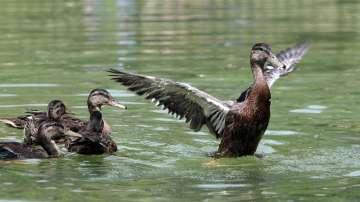 "Обновиха ""Патешкото езеро"" в Борисовата градина"