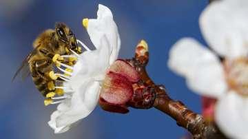 Европарламентът настоява за допълнителна защита на пчелите