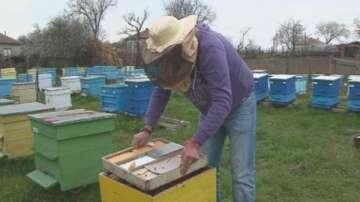 Министерството на земеделието: Работна група ще решава проблемите на пчеларите