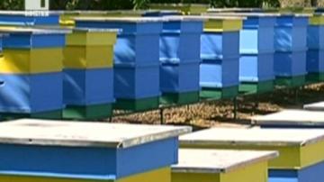 Мор по пчели в Силистренско