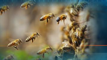 Пчелари се заканиха да блокират главния път Плевен - София