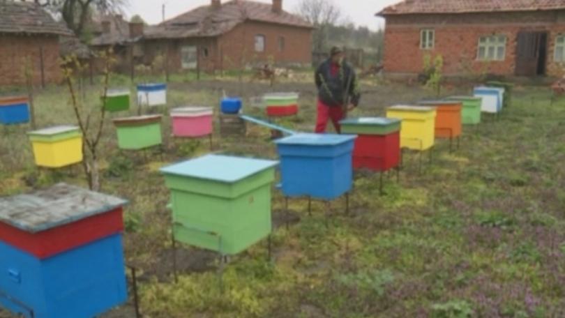 Драстично e намаляла популацията на пчелните семейства в русенско. Близо