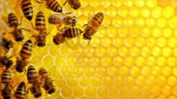 Дронове могат да заместят пчелите