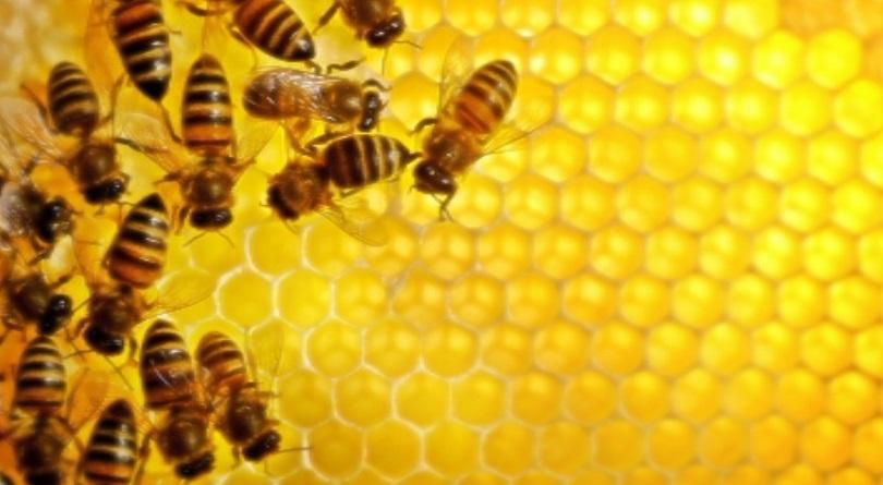 Учители с хоби пчеларство учат своите възпитаници как се гледат