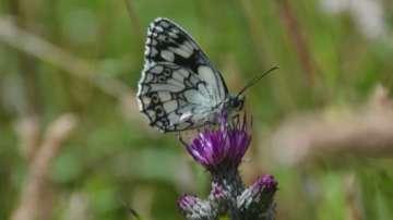 Топлото време доведе до бум на пеперудите във Великобритания