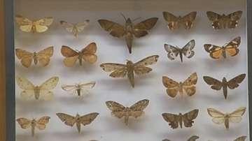 Екзотични пеперуди в природонаучния музей