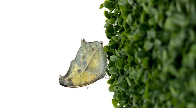 Красивите и атрактивни насекоми са разположени в специално създадена за