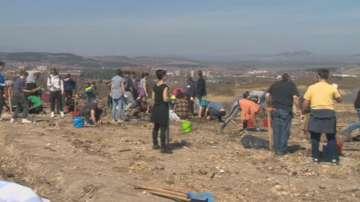 Засаждат 2019 борчета в Перник