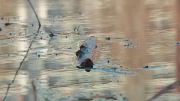 Пестициди за растителна защита най-вероятно са убили рибата в р. Марица