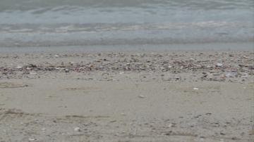 Необичайна оферта: Американски сайт продава пясък от Офицерския плаж