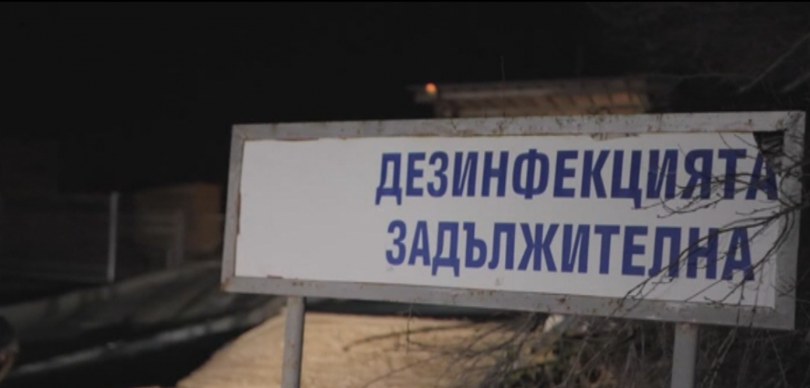 24 500 прасета ще бъдат умъртвени по хуманен начин в с. Никола Козлево