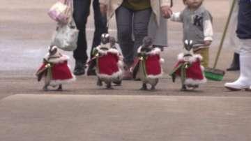Пингвини в костюми на Дядо Коледа шестват в Япония