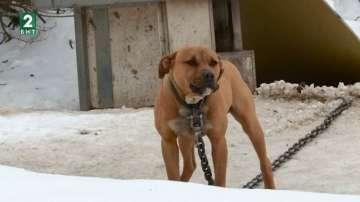 Нови кучета се отглеждат на мястото на 50-те питбула, за които се води дело