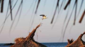 Над 1/3 от плажовете на Северното Черноморие ще се охраняват през лято