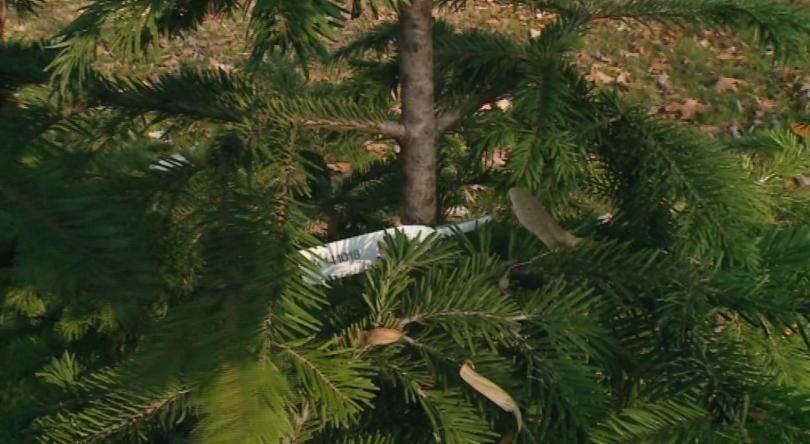 Регионалните дирекции по горите в страната започват масови проверки в