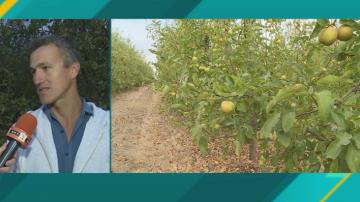 Овощари недоволстват заради ниските изкупни цени и вноса на плодове
