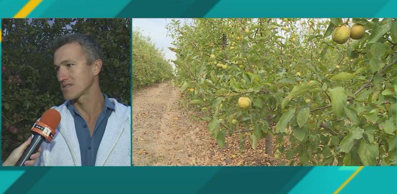 Ниските изкупни цени и вносът на плодове убиват родните производители,