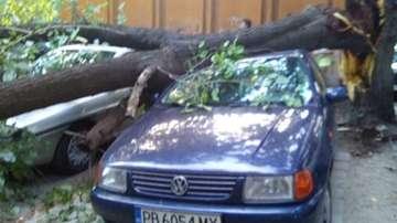 Дърво падна върху 3 автомобила в Пловдив