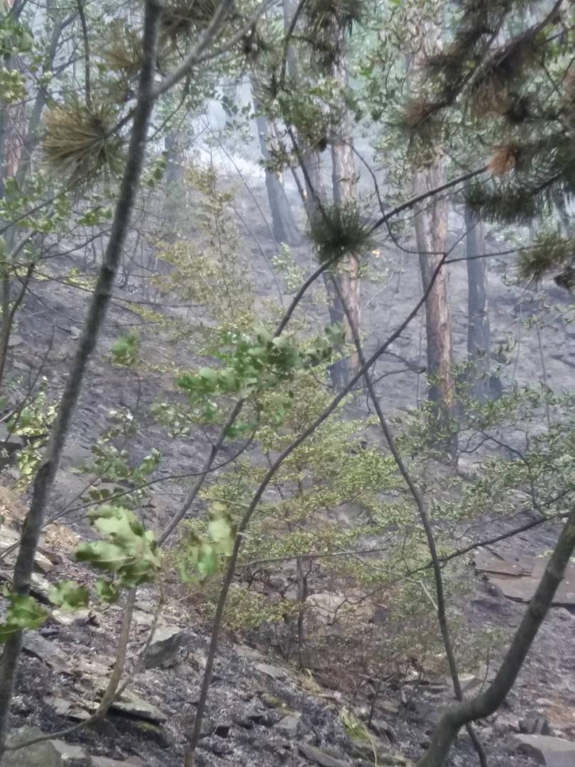 снимка 1 Сухопътни войски се включиха в гасенето на пожара в Карловско