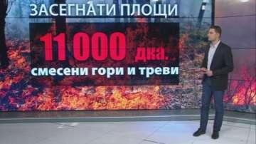 Щети за милиони след горските пожари