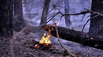 Тополовград обяви бедствено положение заради пожар до село Българска поляна