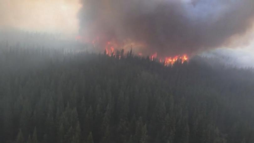 Над 100 пожара са регистрирани от началото на юни в