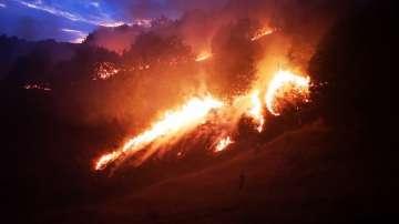 Над 100 горски и пожарникари гасиха пожар край Петрич