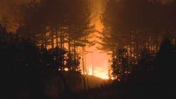 Голям пожар край Благоевград - гори над 350 декара иглолистна гора