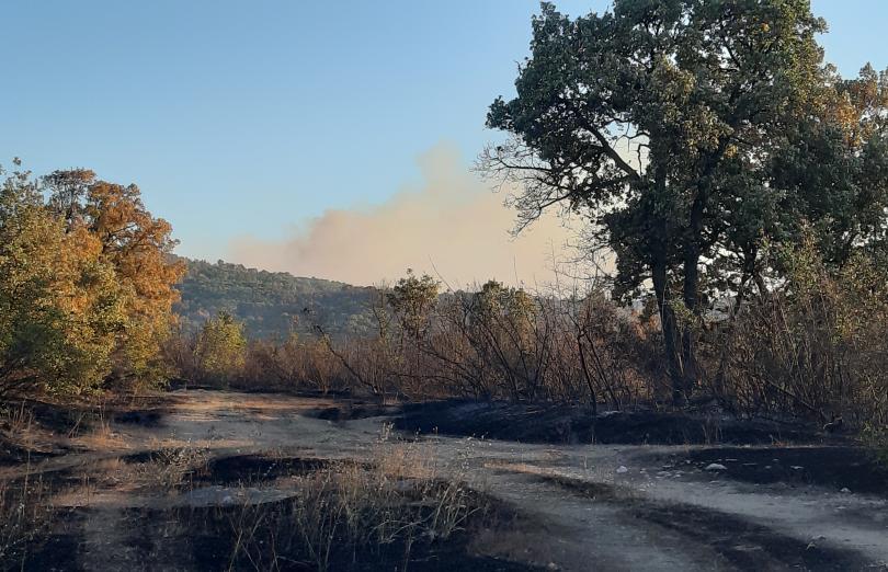 Човешка небрежност е причината за пожара край Хасково. Установено е,