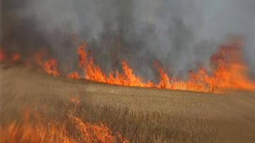 Пожар гори в житен масив край Пловдив