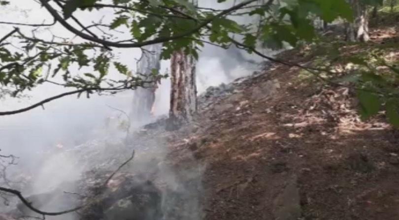 Пожарът край Карлово е овладян