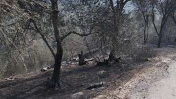 Горски пожари в Тоскана наложиха евакуация на села и затвориха летището в Пиза