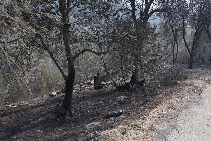 Снимка: Горски пожари в Тоскана наложиха евакуация на села и затвориха летището в Пиза