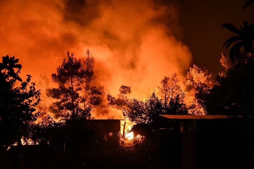 Пожарът на гръцкия остров Евбея причини екологична катастрофа. Досега са