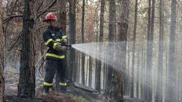 За колко време се възстановява опожарена гора