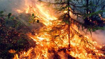 Продължават да горят пожарите в Сибир